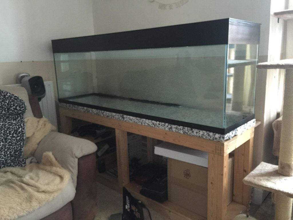 Aquarium when first installed on DIY stand